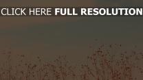 himmel gras wolken licht hintergrund