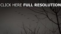 nebel herbst himmel kräne schwarz-weiß-foto
