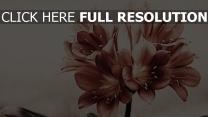 blumen blüten retro-foto sanft