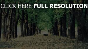 bäume weg blätter gasse