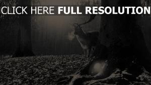 hirsche wald bäume schwarz-weiß-foto