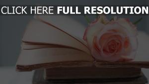 bücher retro notizen rose blütenblätter