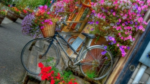 fahrrad dekorative blumen laden retro