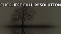 baum zweige silhouette spiegelung nebel