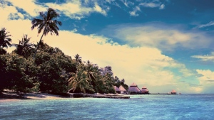 meer bucht tropisch palmen strand
