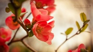 blütenblätter  blumen schöne zweige frühling