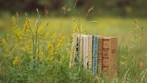 alte bücher gras natur rasen