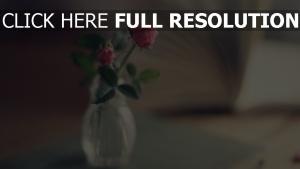 vase rose rosa seiten unschärfe