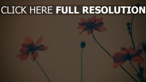 blumen roten blütenblätter unschärfe retro