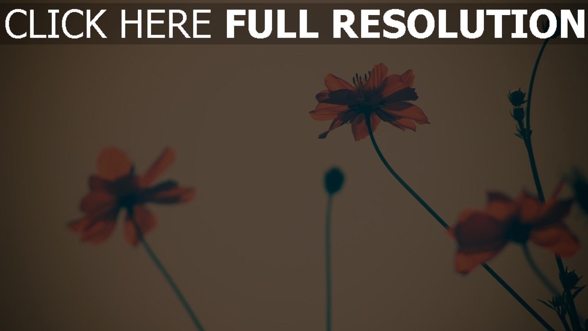 hd hintergrundbilder blumen roten blütenblätter unschärfe retro 1920x1080