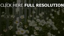 gänseblümchen garten zaun frühling blühen
