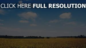 feld blumen gras bäume blauer himmel