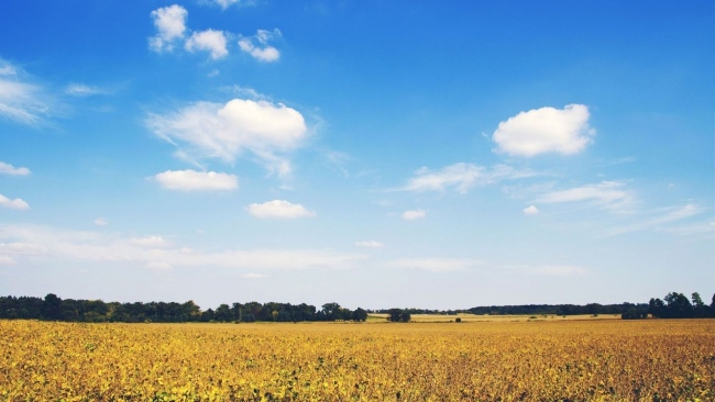 hd hintergrundbilder feld blumen gras bäume blauer himmel