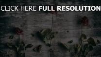 rosen wand getrocknet stengel