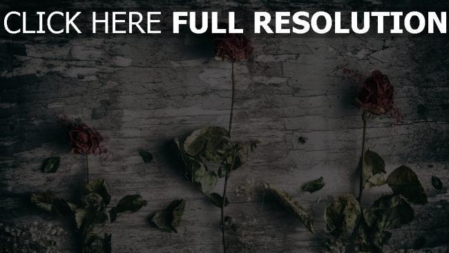 hd hintergrundbilder rosen wand getrocknet stengel