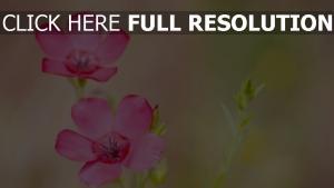 blütenblätter zart rosa foto transparenz
