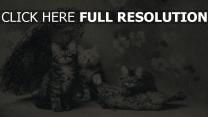 kätzchen regenschirm retro-bild nett