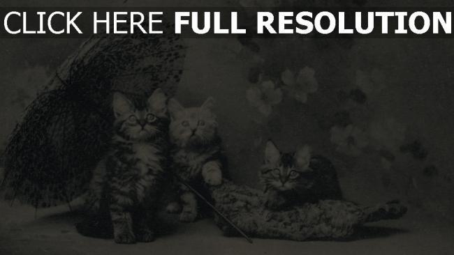 hd hintergrundbilder kätzchen regenschirm retro-bild nett