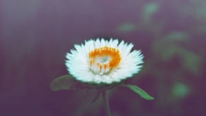blumen blüten niedlich unschärfe