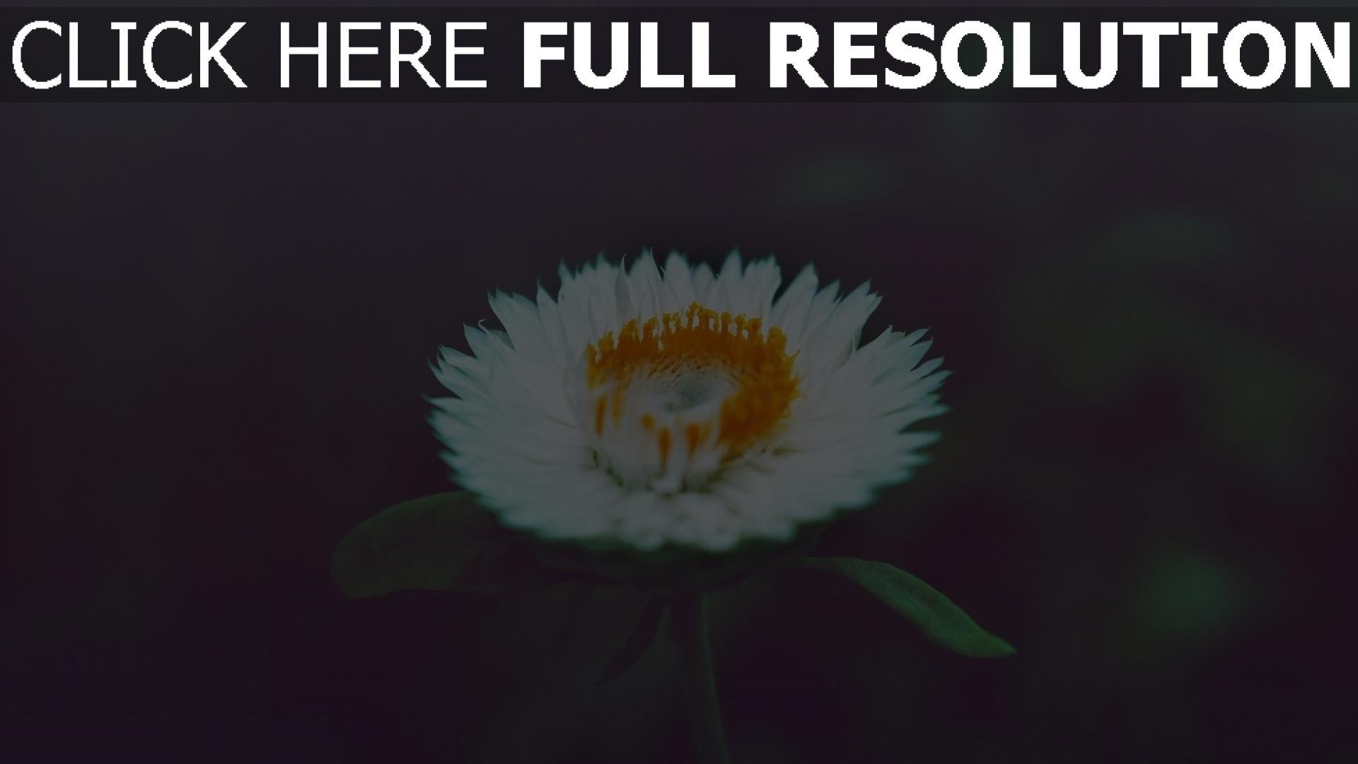hd hintergrundbilder blumen blüten niedlich unschärfe 1920x1080