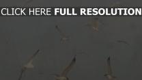 vögel möwen flug retro-foto