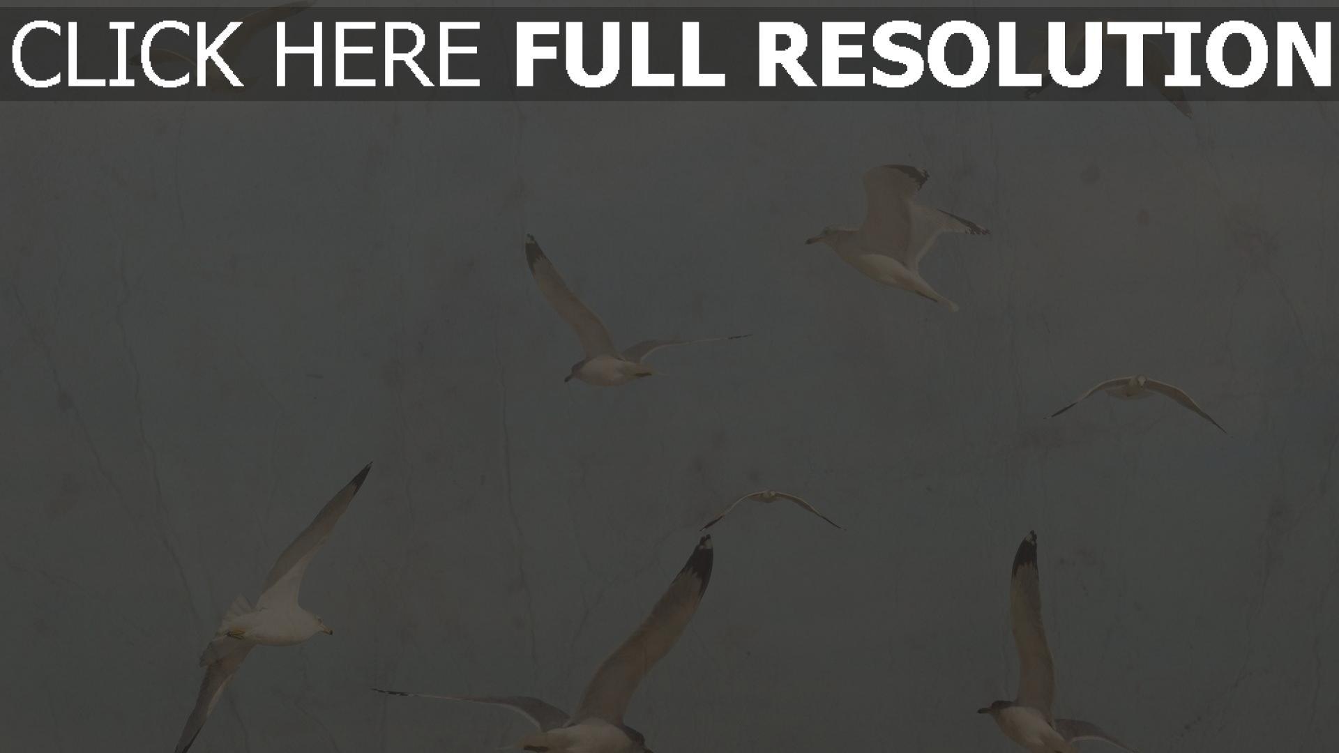 hd hintergrundbilder vögel möwen flug retro-foto 1920x1080