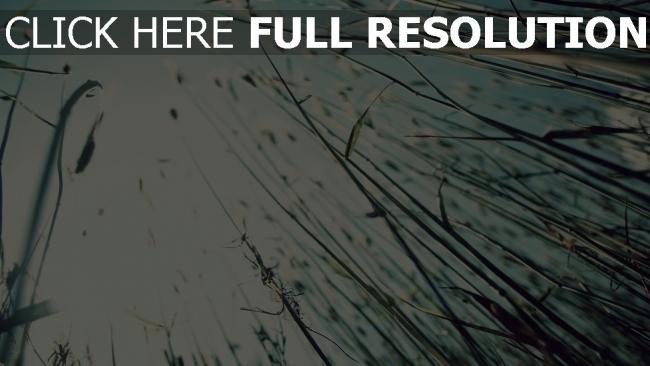 hd hintergrundbilder gras himmel untenansicht schön