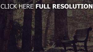 ort der ruhe wald bank bäume