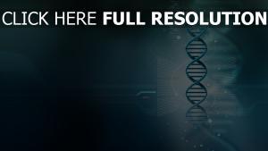 DNA modell größe spirale wissenschaft