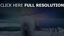 polar bär pinguine nacht lila