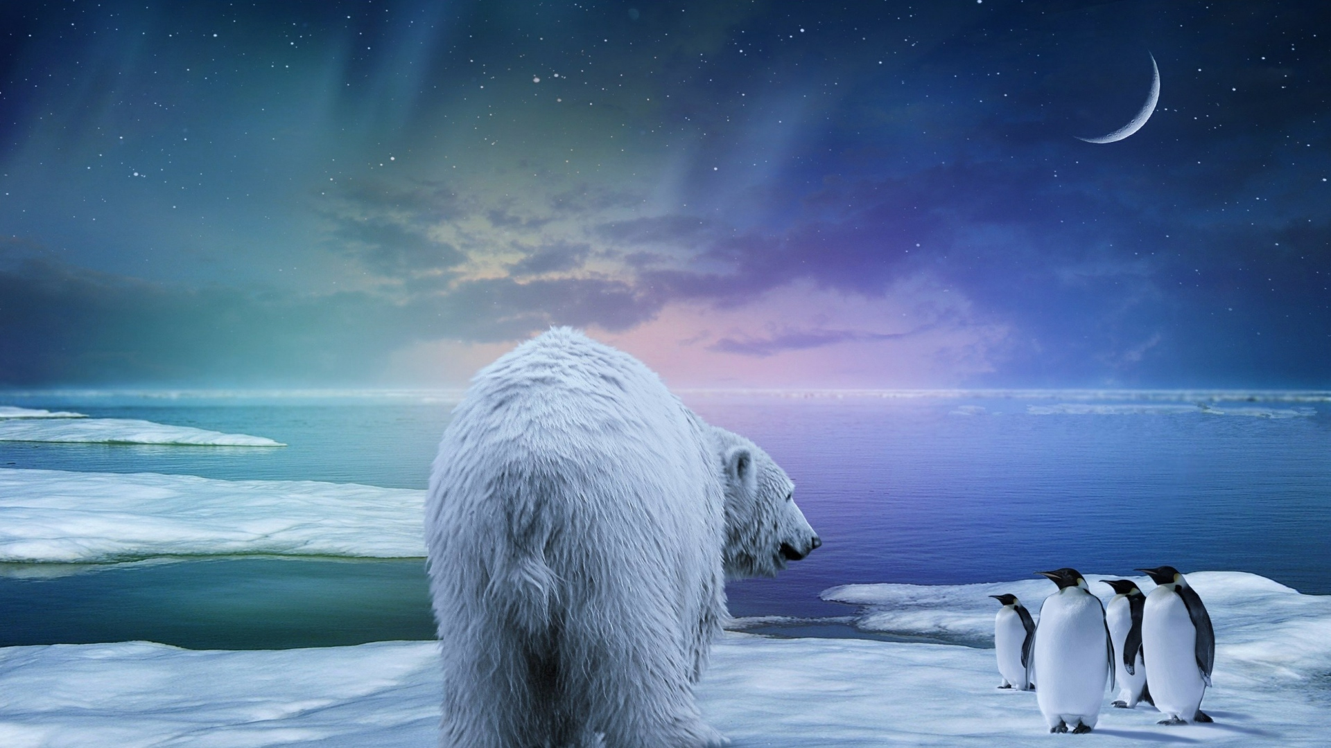 Белый медведь обои на рабочий стол  Wallpapers бесплатно