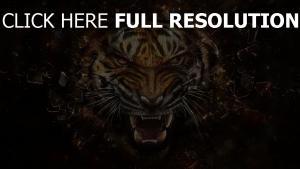 tiger scherben zähne dunkle