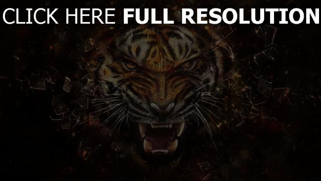 hd hintergrundbilder tiger scherben zähne dunkle