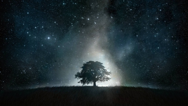 hd hintergrundbilder landschaft baum dunkel sterne himmel