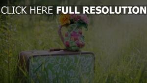 vase strauß koffer gras licht sonne