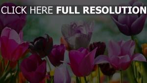tulpen bunt hell sonne licht