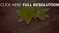 tulpen gelb tisch brett blütenblätter