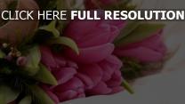 strauß blütenblätter tulpen rosa band