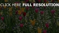 blüte garten tulpen gelb rosa rot