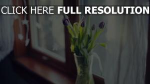 tulpen blumenstrauß vase glas fenster licht
