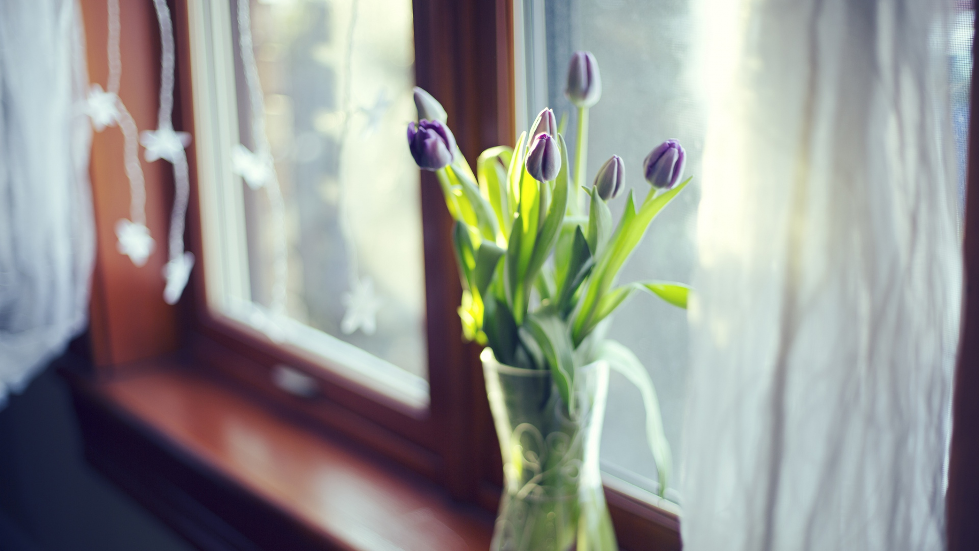 hd hintergrundbilder tulpen blumenstrau vase glas fenster licht desktop hintergrund. Black Bedroom Furniture Sets. Home Design Ideas