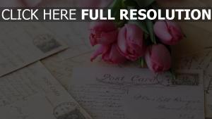 rosa blüten tulpen postkarten strauß
