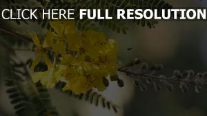 zweig blüte blütenblätter gelb blätter