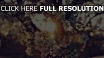 blüten blüten zweige sonne strahlen frühling