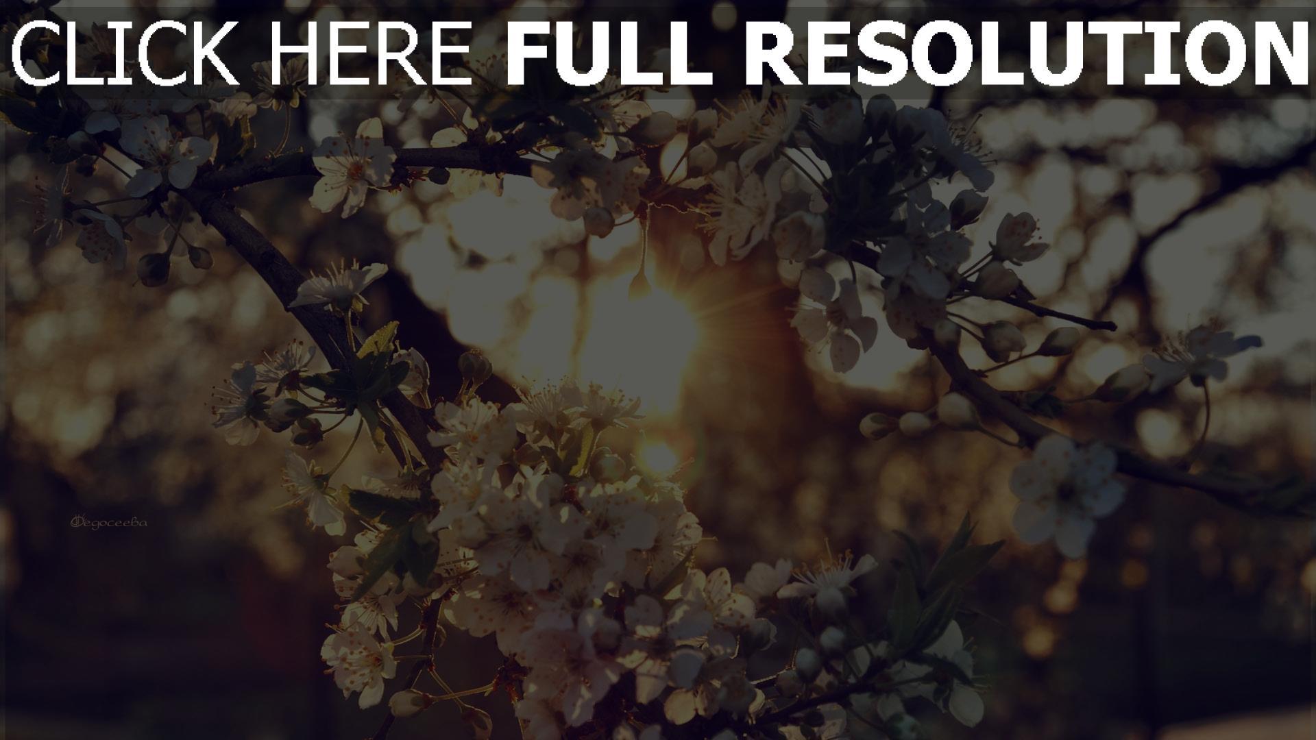 Dawnflower Avatar