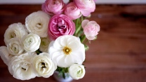 blumenstrauß rosa weiß blütenblätter knospen pfingstrosen