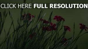 blumen hintergrund grün gras roten blütenblätter
