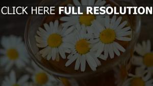 daisy blütenblätter tee glas trinken