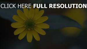 blume gelbe blütenblätter unschärfe