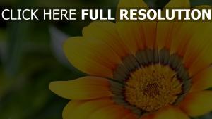 gelb blütenblätter herz verwischen bokeh